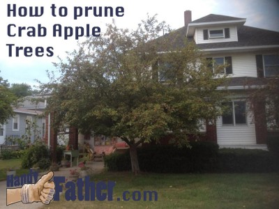 How to prune crab apple trees