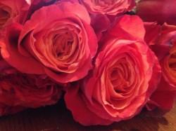beautiful roses I sent my wife